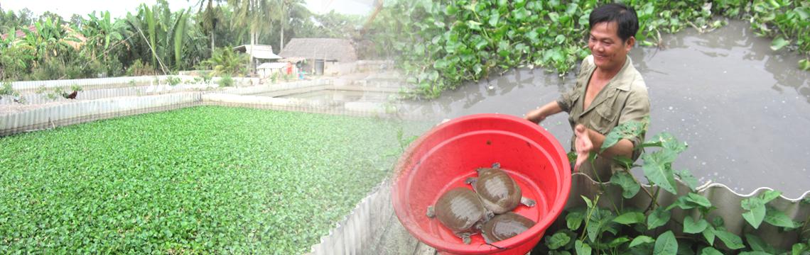 ベトナム養殖場の品質管理